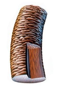Бальзам корень сибирское здоровье от выпадения волос