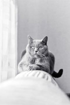 Кошка дерет мебель? Отучить кошку царапать мебель просто