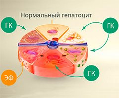 Прополис при болезнях печени и