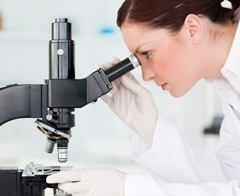Нормы содержания лейкоцитов в моче
